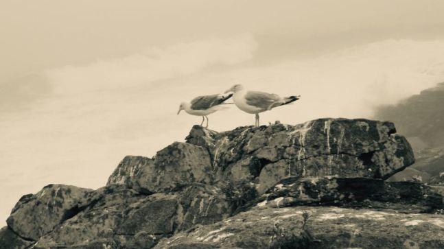 gulls_sepia