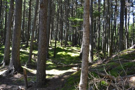 monhegan_trail